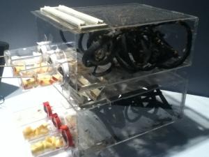 La ferme du futur! Élevage de grillons à domicile, ce prototype de 2 étages contient de la styromousse et des tubes avec des pommes et des tampons humides, afin que les insectes puissent se déplacer, se nourrir et s'abreuver. Facilement démontable pour le nettoyage, tout autre feuilles mortes ou déchets de table peuvent y passer afin que les grillons se délectent. Cette fermette du futur a été imaginée et conçue par l'architecte docteur Jakub Dzamba, qu'il a surnommée 'la ferme du 3e millénaire.'
